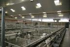Nieuwbouw vleeskalverenstal Otterlo
